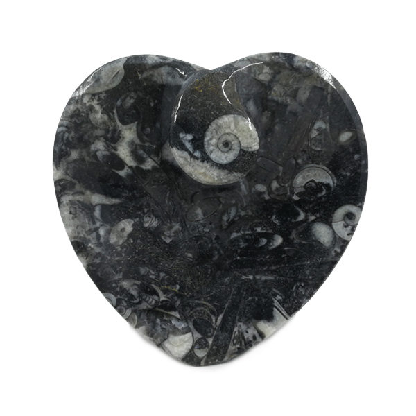 goniatite,fossil,dish,decor